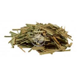 Citronelová tráva - lemongrass