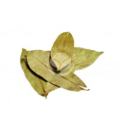 Graviola - Annona list